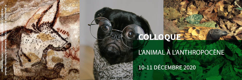 bandeau_colloque_animal